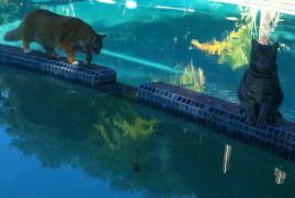 Water cats