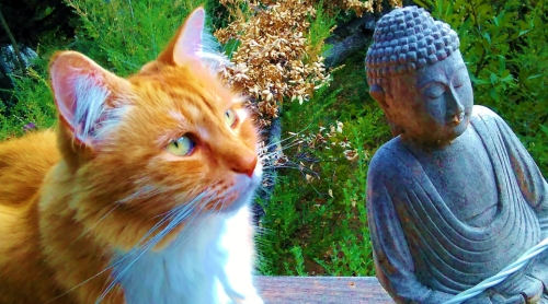 Derp and Buddha