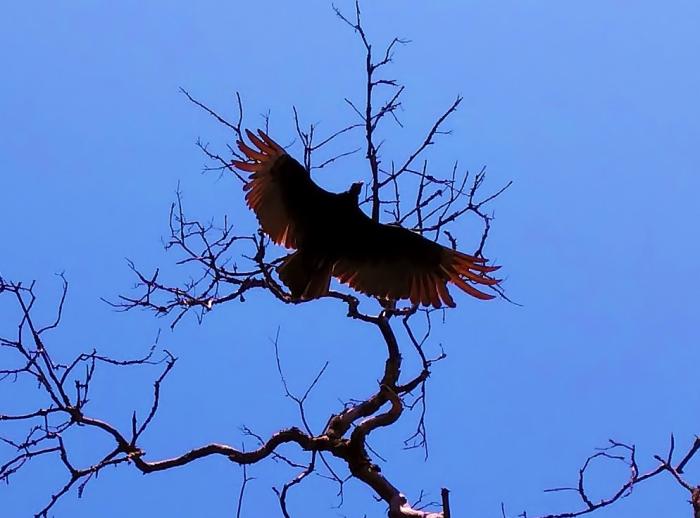 In Honor of Nekhbet, the VultureGoddess