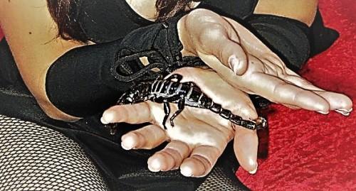 Emperor Scorpion friend