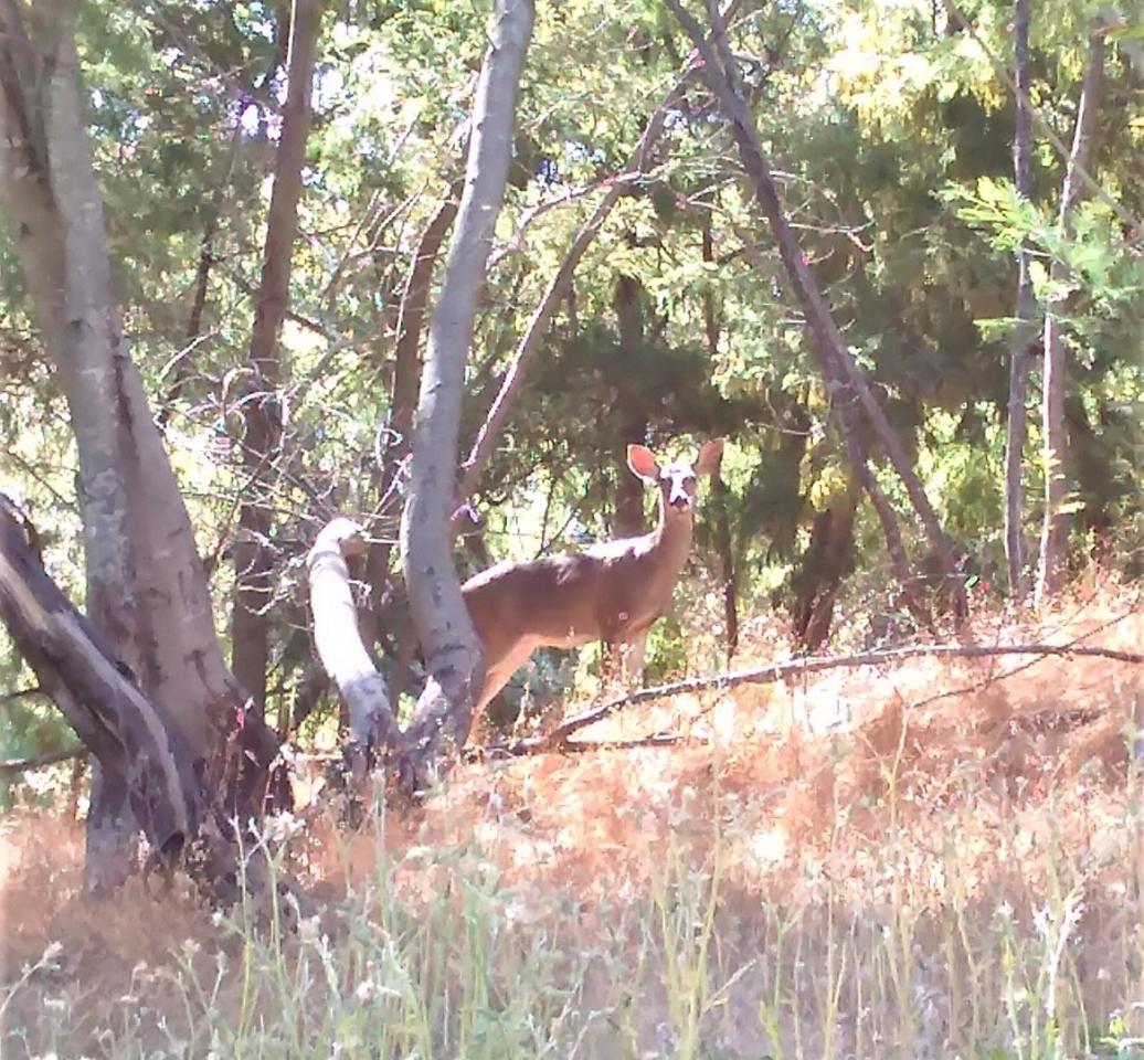 deer-e1529531148256.jpg