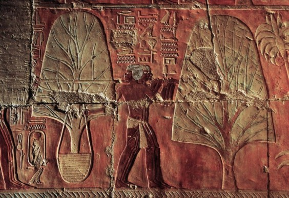 egyptian_arboriculture