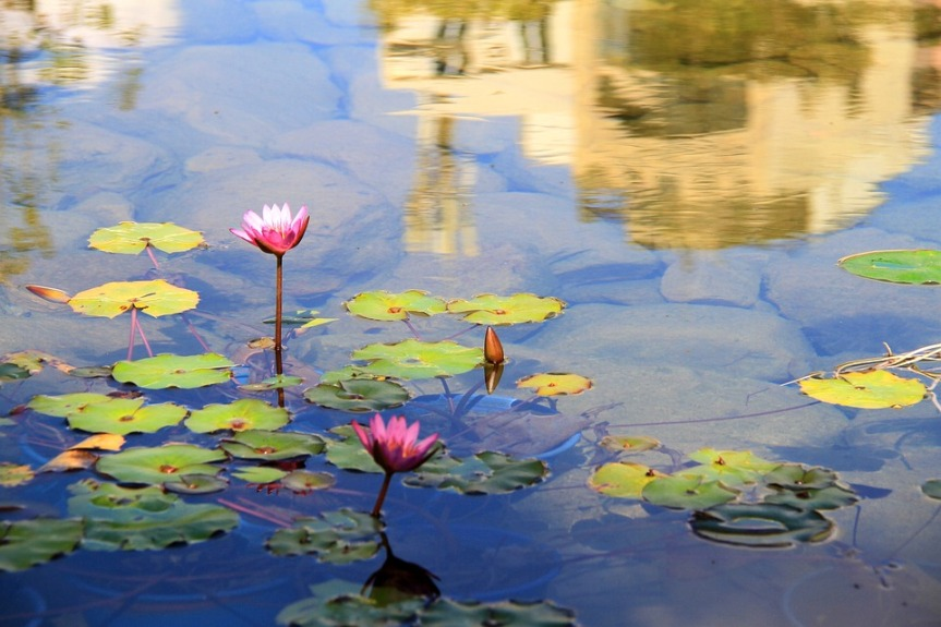 The Blue Lotus and Nefertem